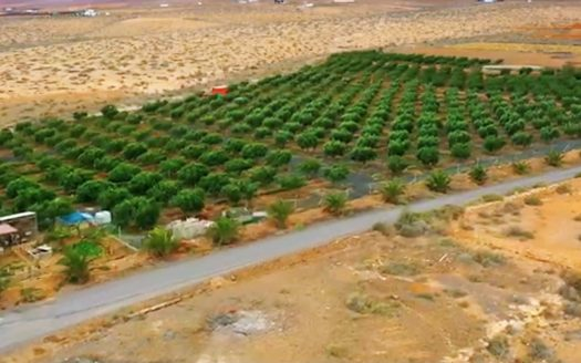 Finca mit Olivenfarm